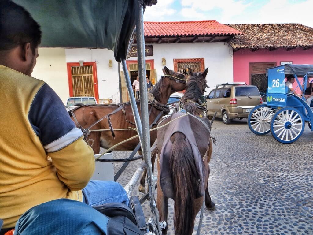 Hevoset sekoilevat