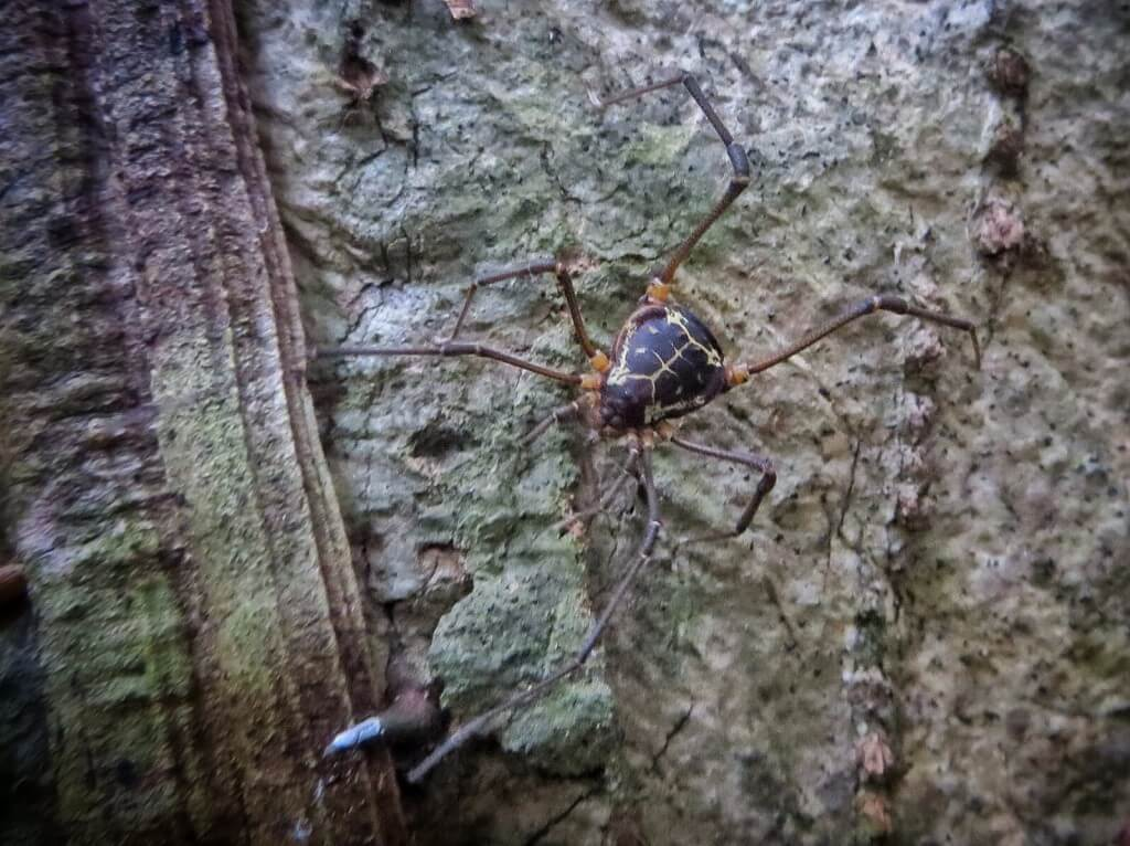 Ja Luntsun pyynnöstä vielä hämähäkki