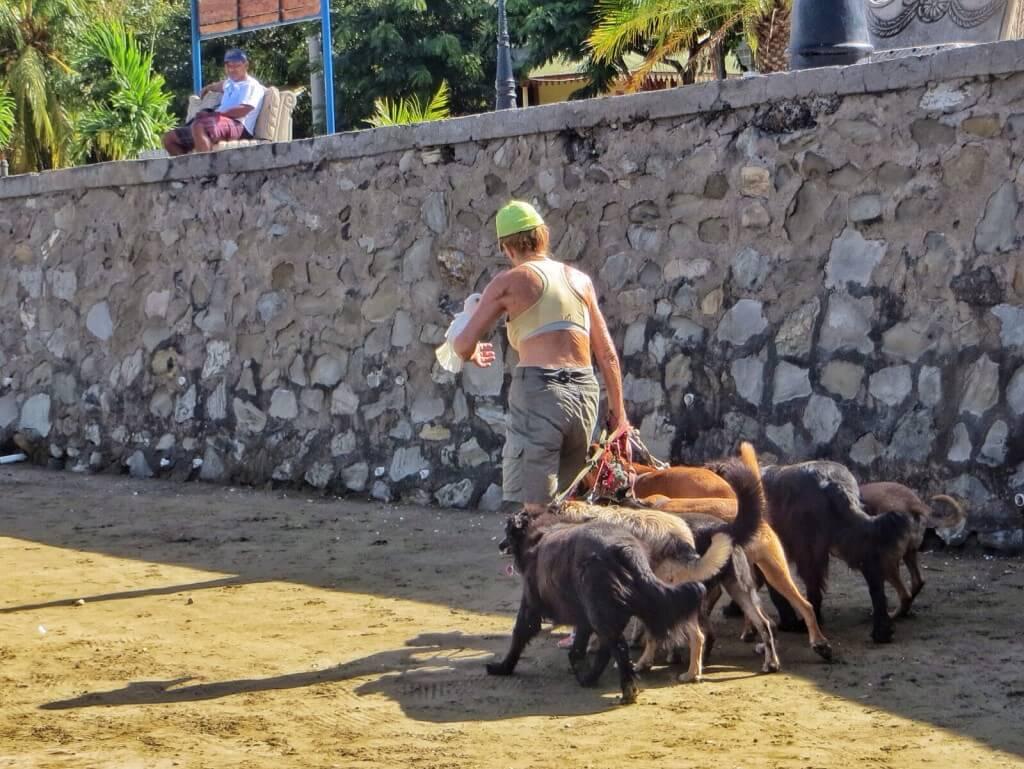 7 koiraa (joista yksi kolmijalkainen) ja papukaija rouvan kanssa aamulenkillä, San Juan del Sur