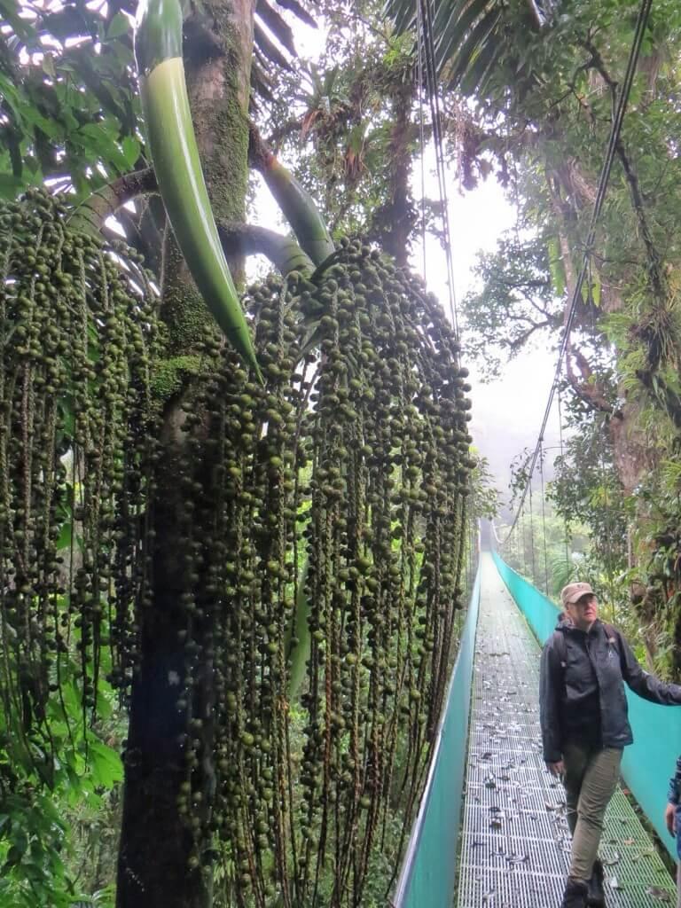 Ennen canopya teimme sateisen luontoretken viidakossa ja riippusilloilla