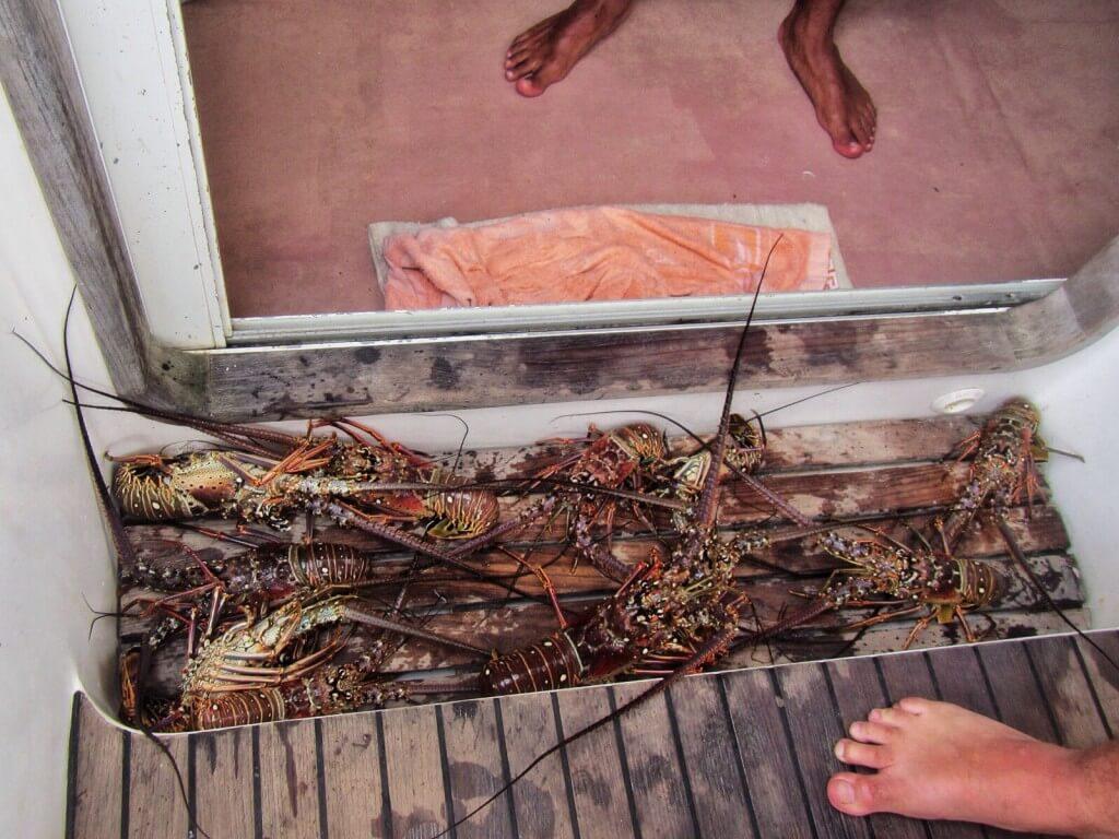 Näyttää siltä, että tänä iltana syödään hummeria
