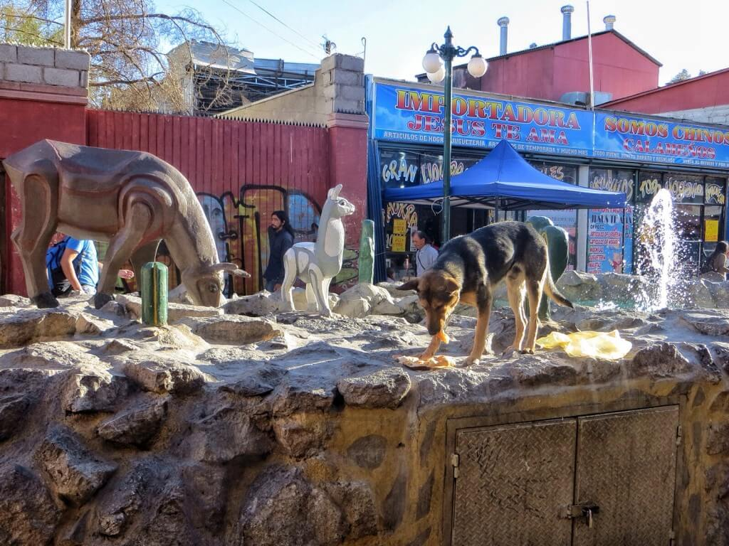Reppuvarkaudesta huolimatta Calama vaikutti melko mukavalta kaupungilta. Kuvassa koira syö löytämäänsä leipää laamakuvaelman keskellä.