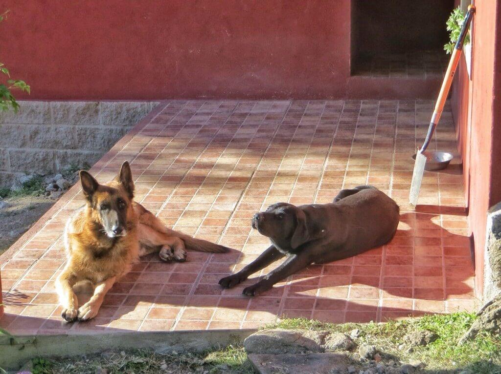 Ja talon koirat Socco ja Molo.
