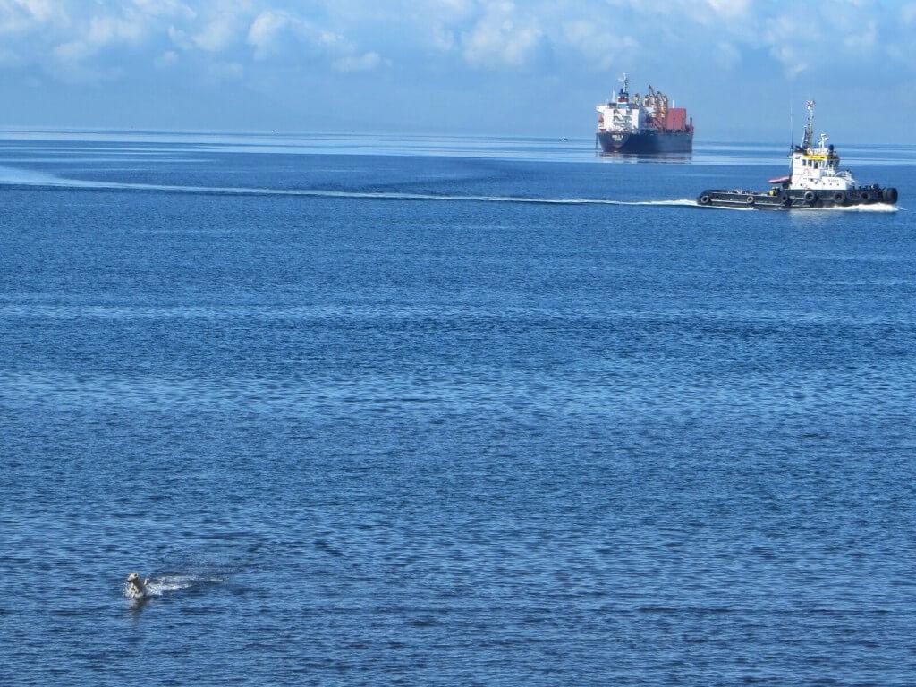 Kaksi laivaa ja kahlaava koira.