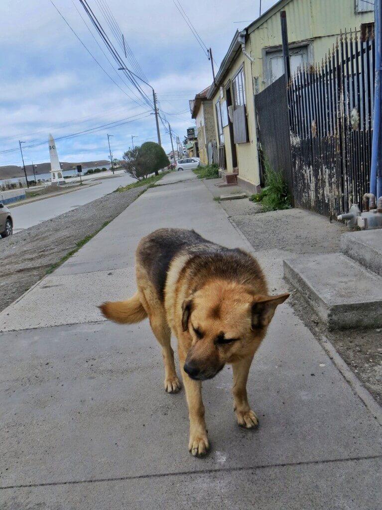 Reissumme ystävällisimmät ja iloisimmat koirat löytyivät Patagoniasta. Tämä tanakka kaveri päivysti leipomon ovella Porvenirissa.