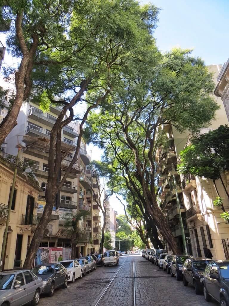 Palermon katujen varsilla on yllättävän paljon puita.