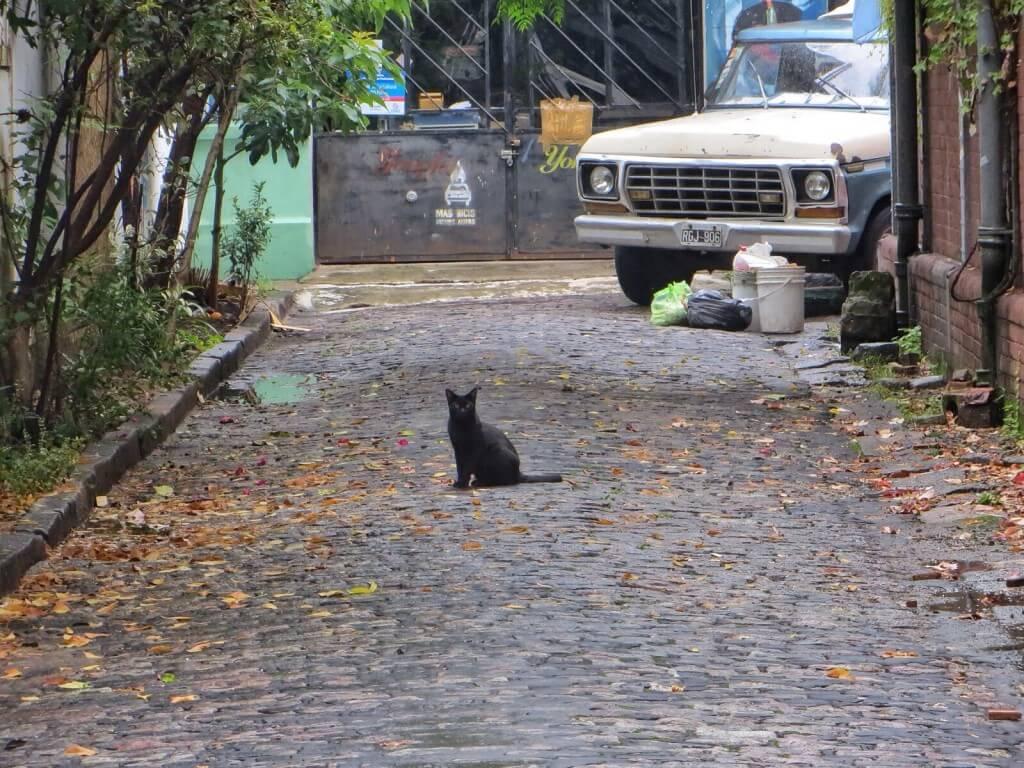 Kuja ja kissa.